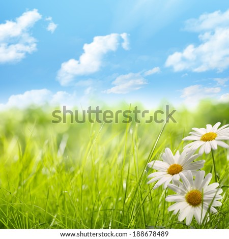 Natural background with daisy flower on grass - stock photo