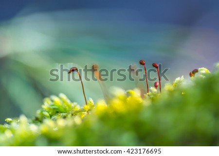 Natural background with sporous capsules of a moss. - stock photo