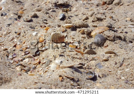 Natural beach background. Sea shells on sand. Close up