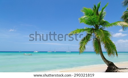 natural beach with a palm tree in the Dominican Republic