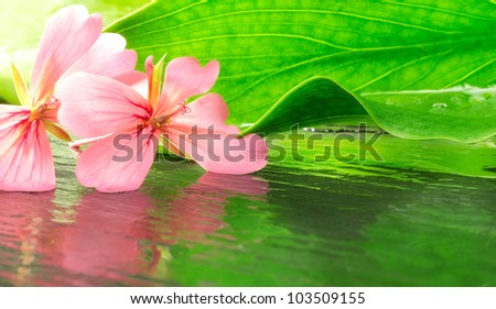 natural beauty concept with geranium and leaf - stock photo