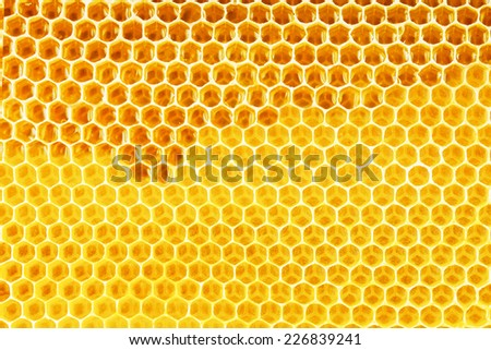 natural bee honey in honeycomb background - stock photo