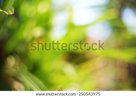 Natural Bokeh,blurred bokeh,blur background. - stock photo