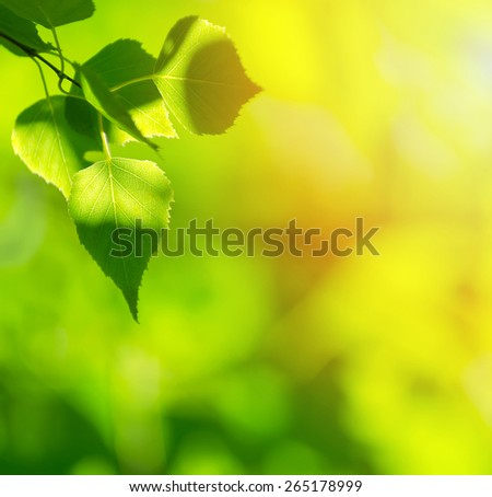 Natural bright background with birch leaves - stock photo