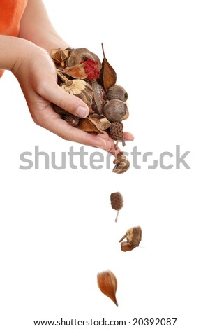 Natural bush potpourri tumbling from hands.   Falling pieces show motion - stock photo