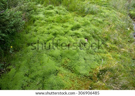 Natural carpet of green moss on a forest floor - stock photo