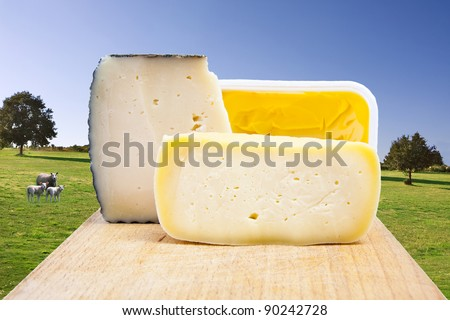 natural cheese, dairy products industry - stock photo