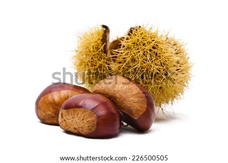 natural chestnuts, fresh fruits of the season of autumn