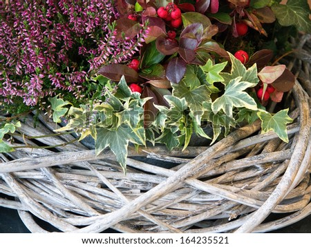 Natural christmas decoration in wicker basket - stock photo