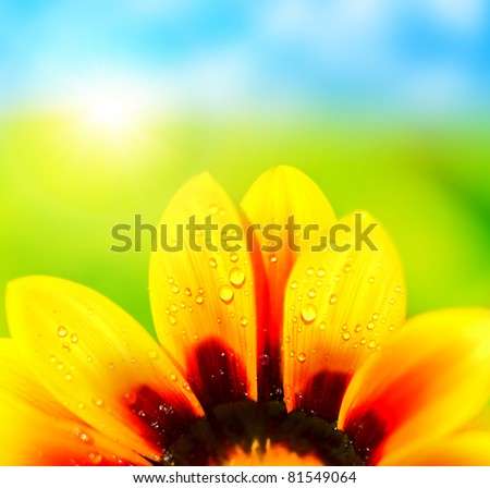 Natural colorful  abstract background, wet yellow petals of daisy flower, macro details - stock photo