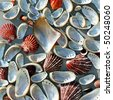 Natural colorful cockleshells of different kinds on a textured lightly grey background.These include shells with nacre. - stock photo