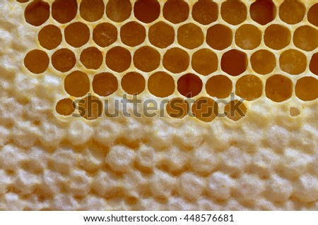 Natural completed and uncompleted honeycombs.