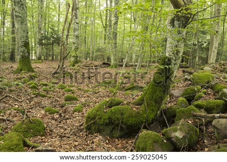 Natural deciduous forest in Sweden, these forests are important habitats for many rare insects - stock photo