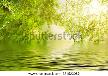 Natural defocused and depth of field (DOF) effect of green leaf, the bokeh effect and morning sunlight - stock photo