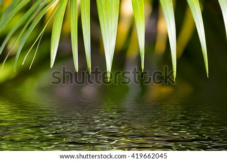 Natural defocused and depth of field (DOF) effect of palm leaf, the bokeh effect, morning sunlight and water reflection  - stock photo