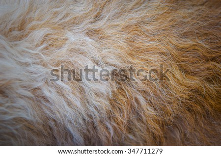 Natural dog wool texture closeup for background - stock photo