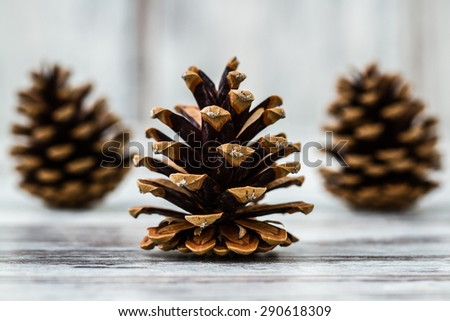 Natural dry pine cones on wooden white table background