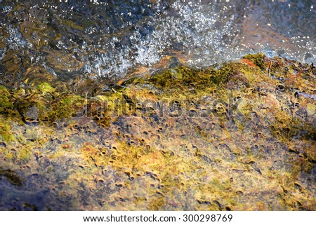 Natural ecosystem in a stream. Water flowing over a rock covered with algae and perhaps coelenterates (sponges). - stock photo