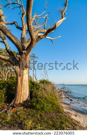 Natural erosion along the shoreline on Big Talbot Island in Jacksonville. - stock photo