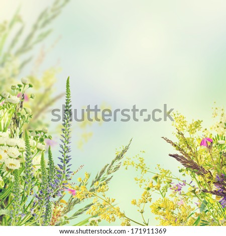 Natural floral background - stock photo