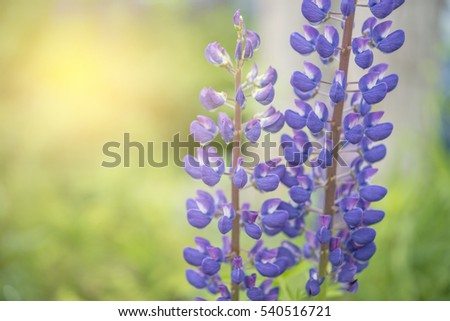 Natural flower background Amazing purple blossom in the garden under sunlight