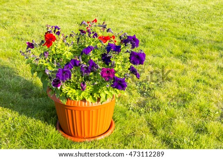 Natural flowers in pot outside