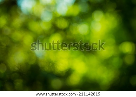 natural forest bokeh background - stock photo