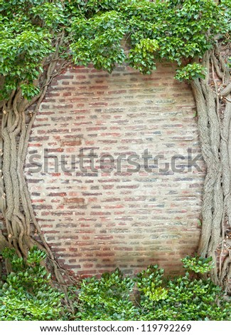 Natural frame of ivy growing on the old brick wall - stock photo