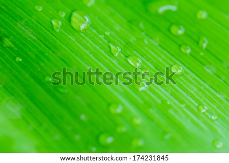Natural green and drops of water background