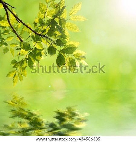 natural green background. Fresh green leaf against bokeh background with len flare reflecting in the water. - stock photo