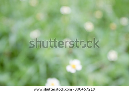 natural green background,green leaf background