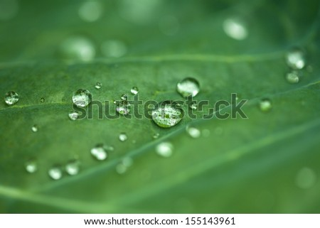 Natural green background with leaf and drops of water - stock photo