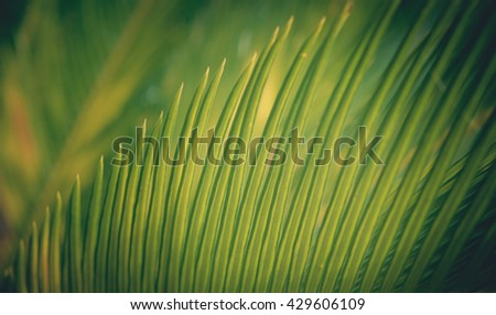 Natural green background with selective focus. Leaf texture. Green leaf background. Leaf background. Coconut Leaf. Green Leaf texture background macro. Green Leaf. Natural green Leaf. - stock photo