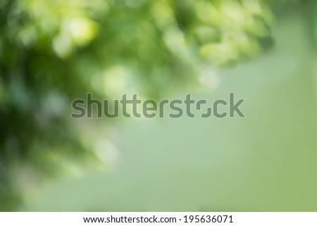 Natural green Bokeh, blurred bokeh background - stock photo