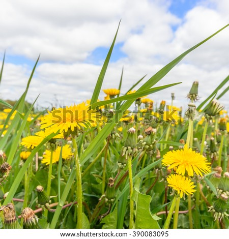 natural green colorful rural meadow, nature series - stock photo