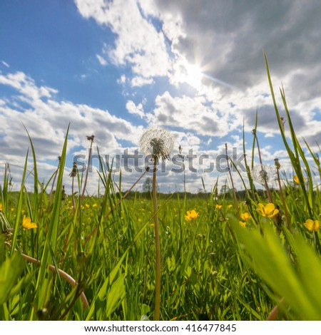 natural green colorful rural meadow, nature series