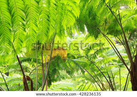 Natural green fern - stock photo