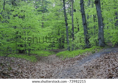 Natural green forest, spring time - stock photo
