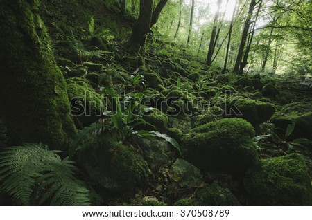 natural green forest with moss and lush vegetation - stock photo