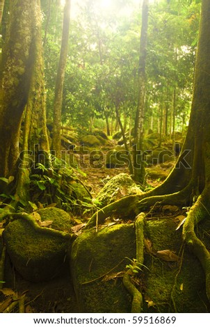 natural green forest with ray of lights - stock photo