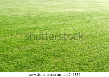 Natural green grass field background - stock photo
