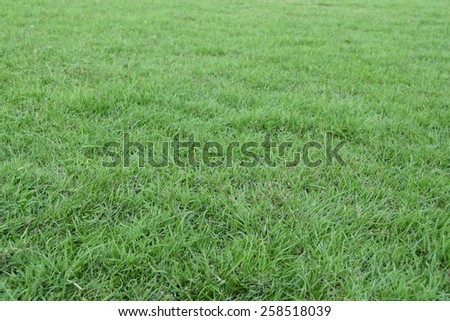 natural green grass field used for background - stock photo
