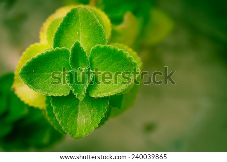 Natural green leaf background