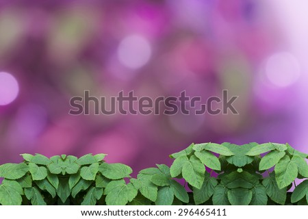 natural green leaf with bokeh for background - stock photo