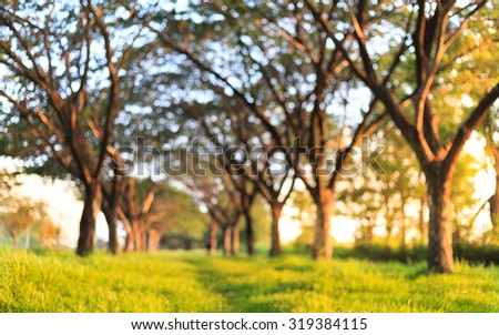 natural green tree tunnel background (blured) - stock photo