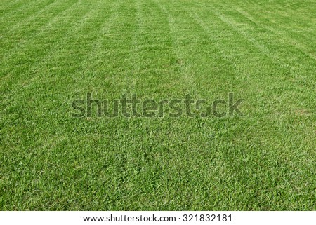 Natural green trimmed grass field background - stock photo