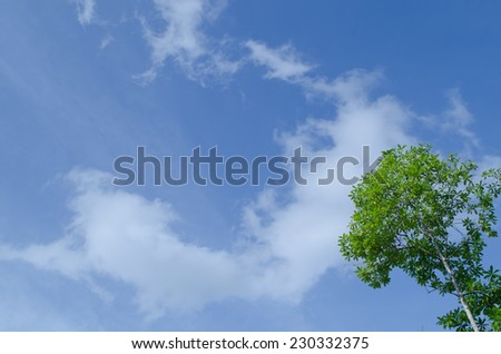 natural have big tree in the rain forest and blue sky