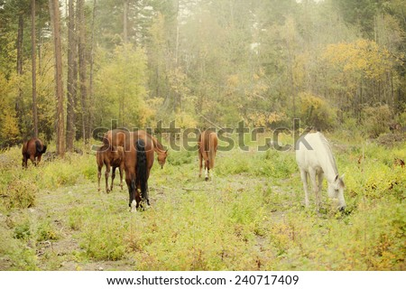 Natural herd of horses with misty background - stock photo