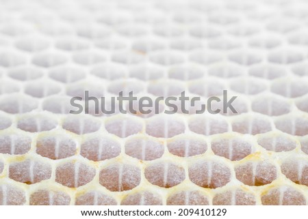 Natural honeycombs. Focus in front. - stock photo
