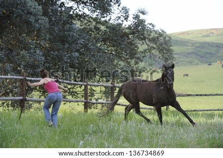 Natural Horsemanship.  Horse dancing. Movement and Motion. working with horse in paddock, Himeville, kwazulu Natal, South Africa